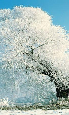 13833 скачать обои Пейзаж, Зима, Деревья, Снег - заставки и картинки бесплатно