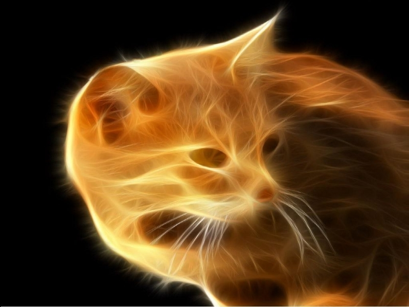 45755 download wallpaper Cats, Animals, Fantasy screensavers and pictures for free