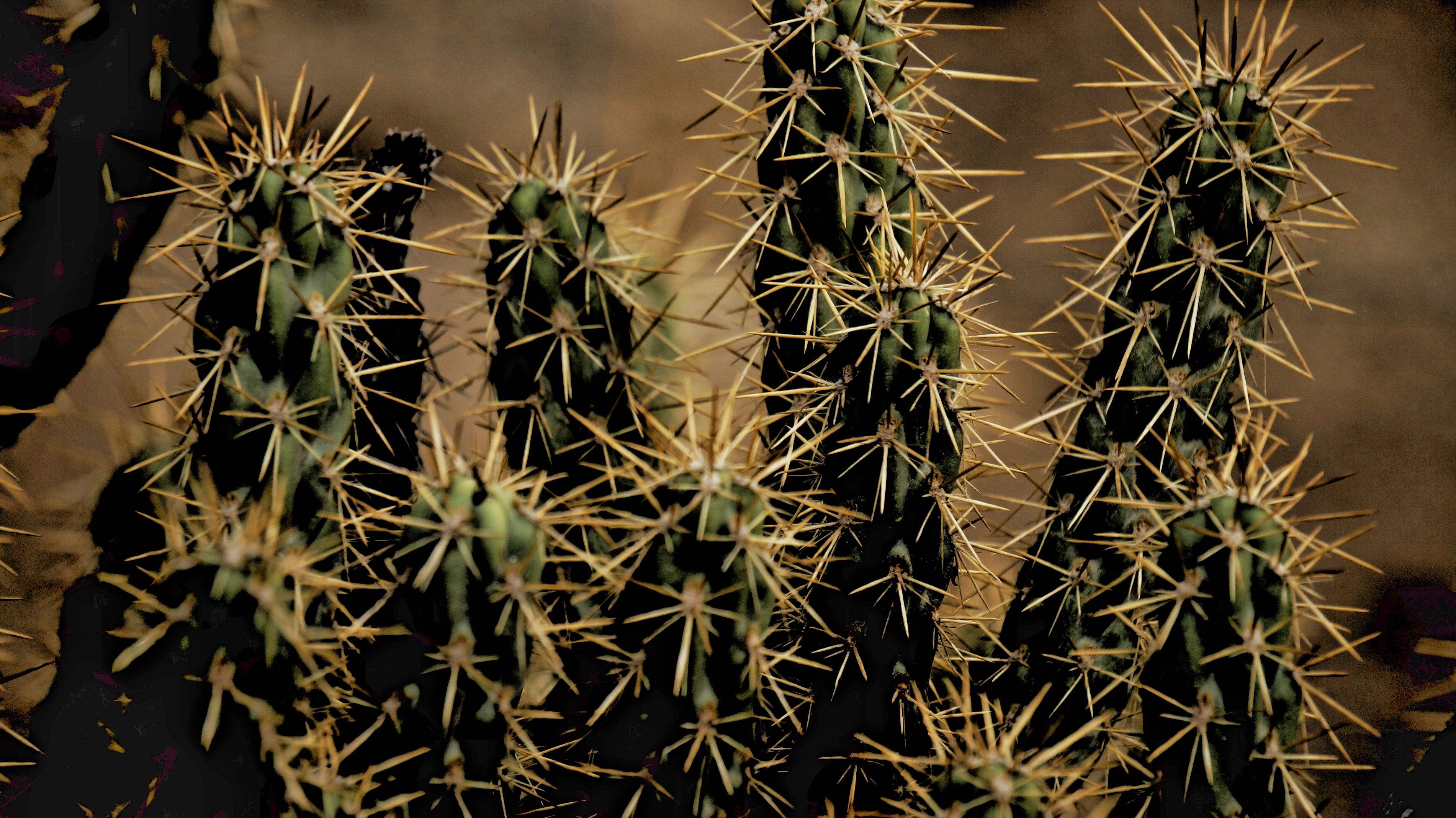 104119 descargar fondo de pantalla Flores, Espinas, Planta De Interior, Houseplant, Cactus: protectores de pantalla e imágenes gratis