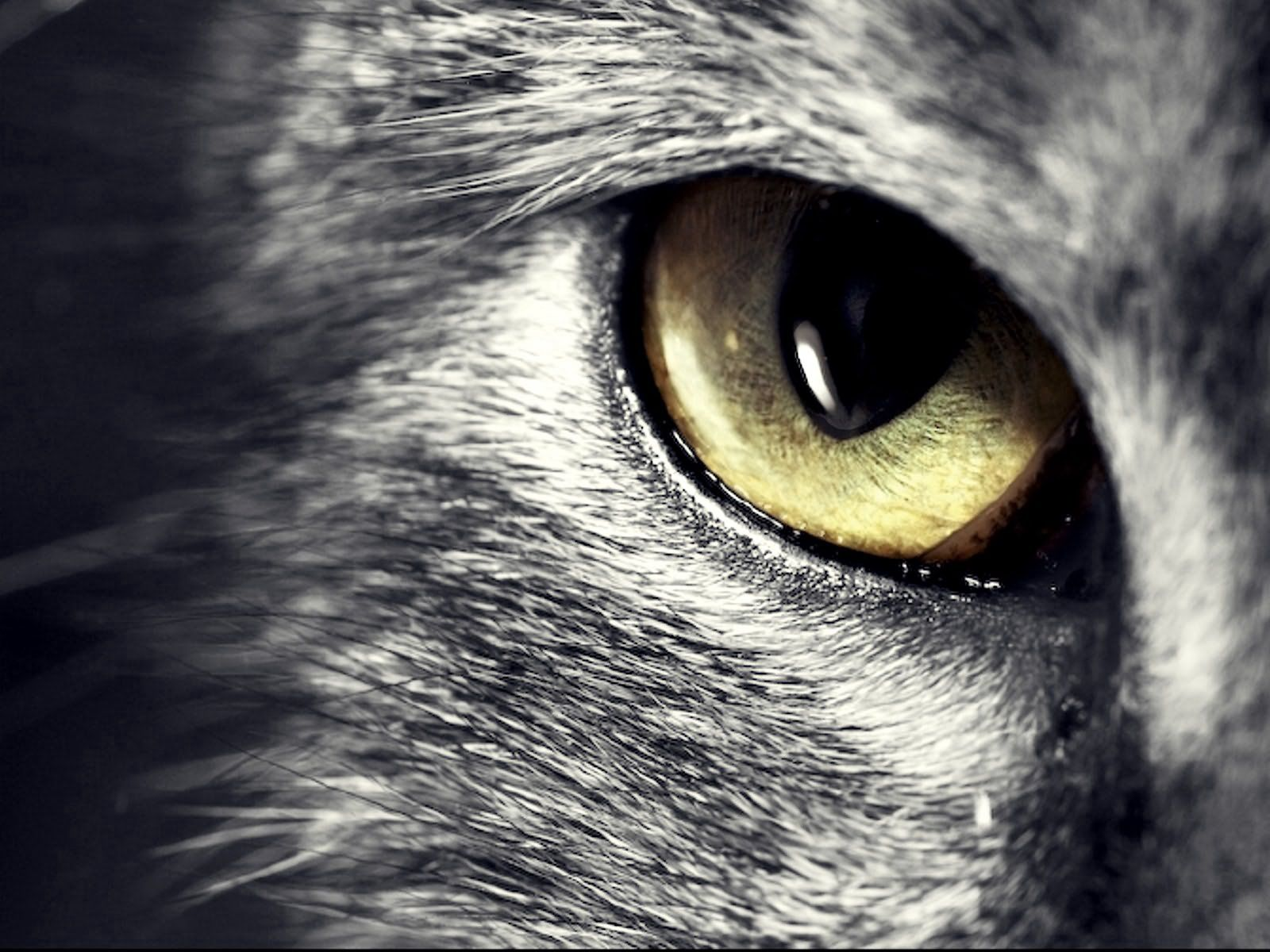 100867 download wallpaper Animals, Cat, Sight, Opinion, Eyes, Muzzle screensavers and pictures for free