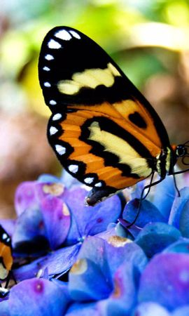 81960 descargar fondo de pantalla Macro, Mariposas, Hierba, Planta, Flores: protectores de pantalla e imágenes gratis