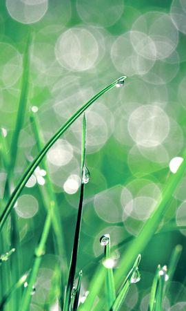 26534 скачать обои Растения, Трава, Фон, Капли - заставки и картинки бесплатно