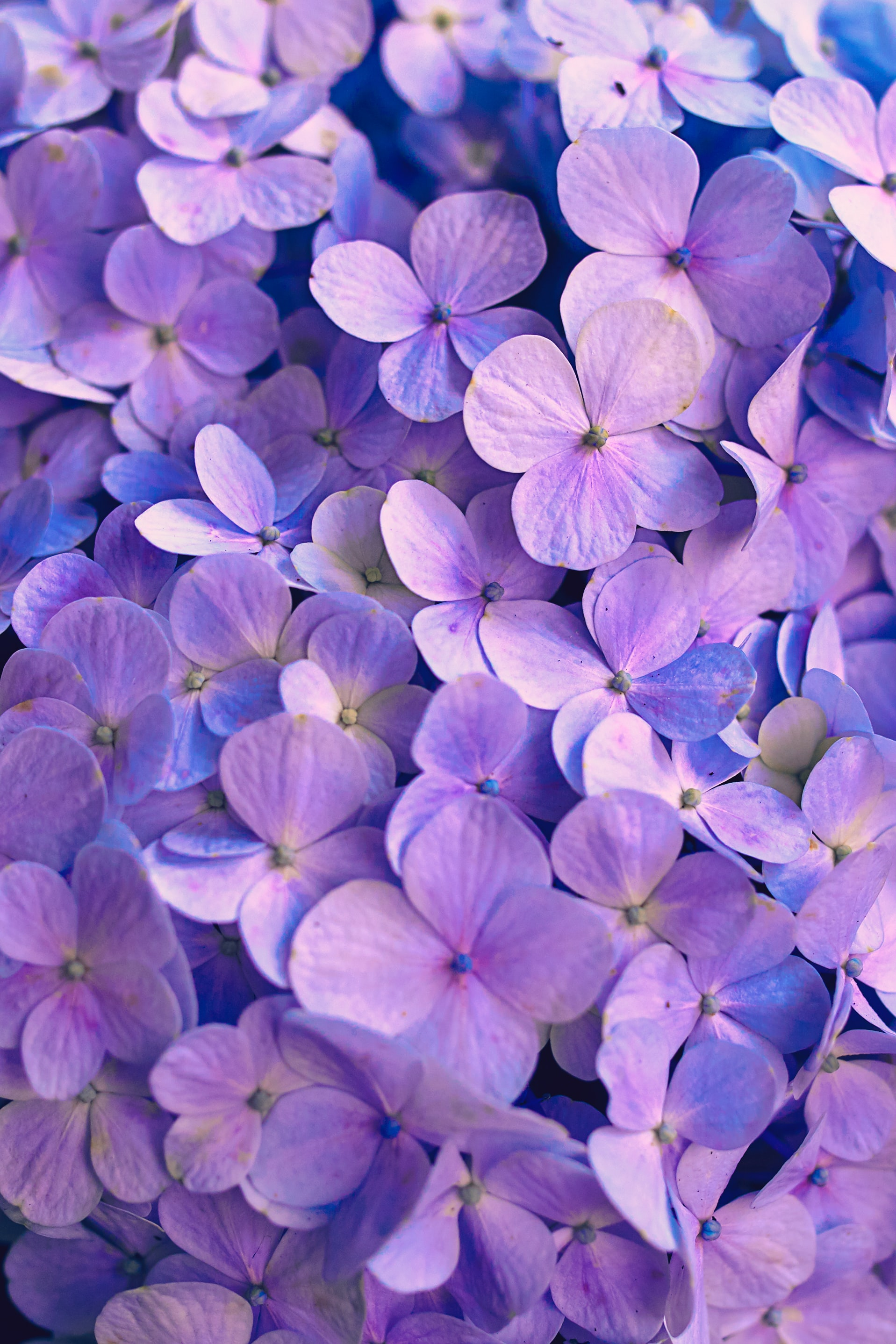 Download free Petals HD pictures