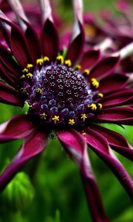 297 скачать обои Растения, Цветы - заставки и картинки бесплатно