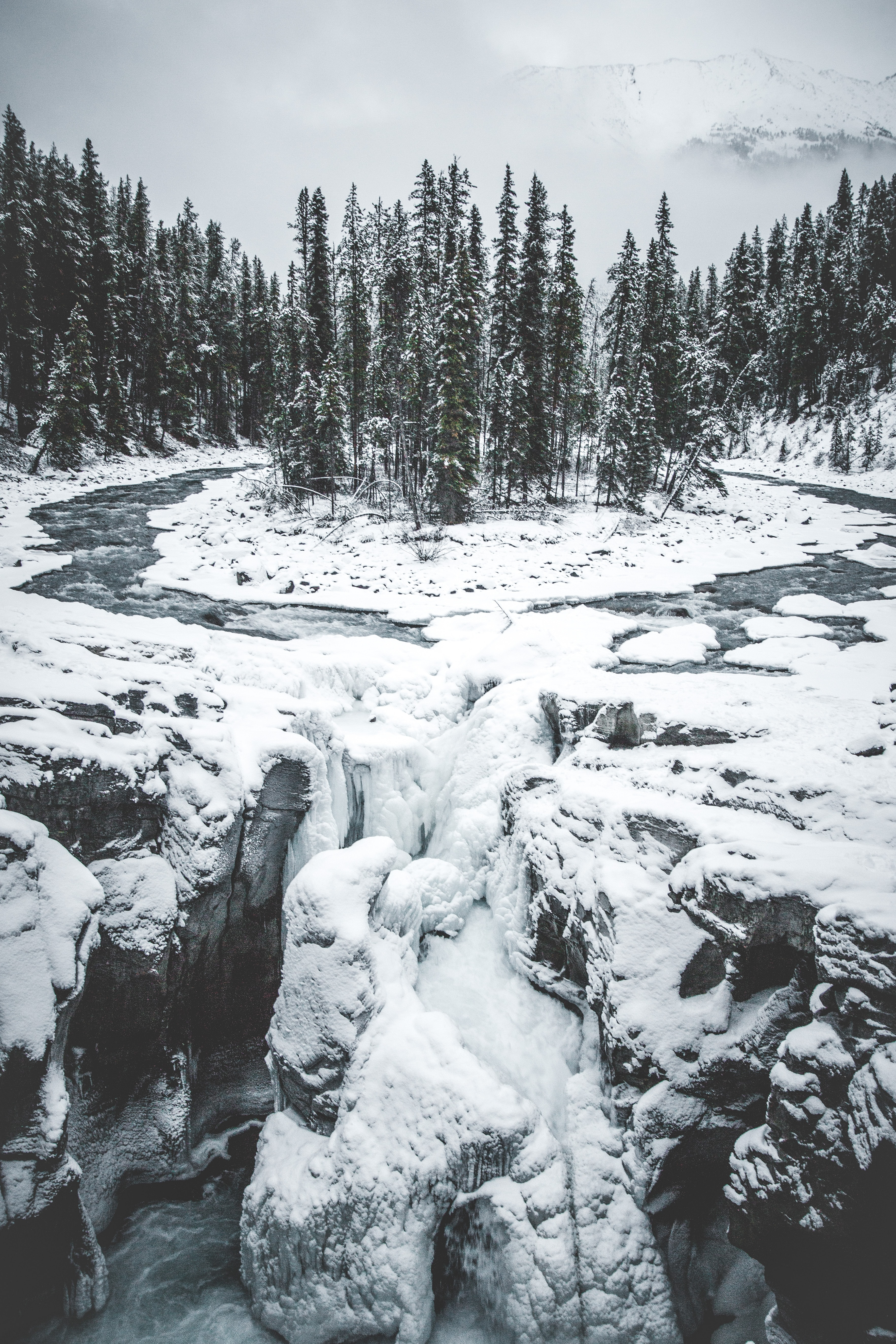 81636 download wallpaper Nature, Forest, Trees, Ice, Snow, Snow Covered, Snowbound screensavers and pictures for free