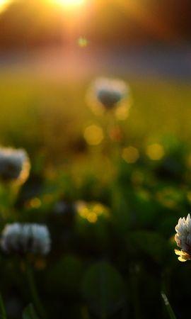22637 скачать обои Растения, Цветы, Закат - заставки и картинки бесплатно