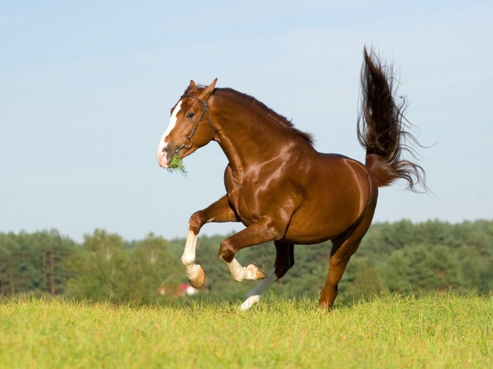 Популярные картинки Лошади в HD качестве