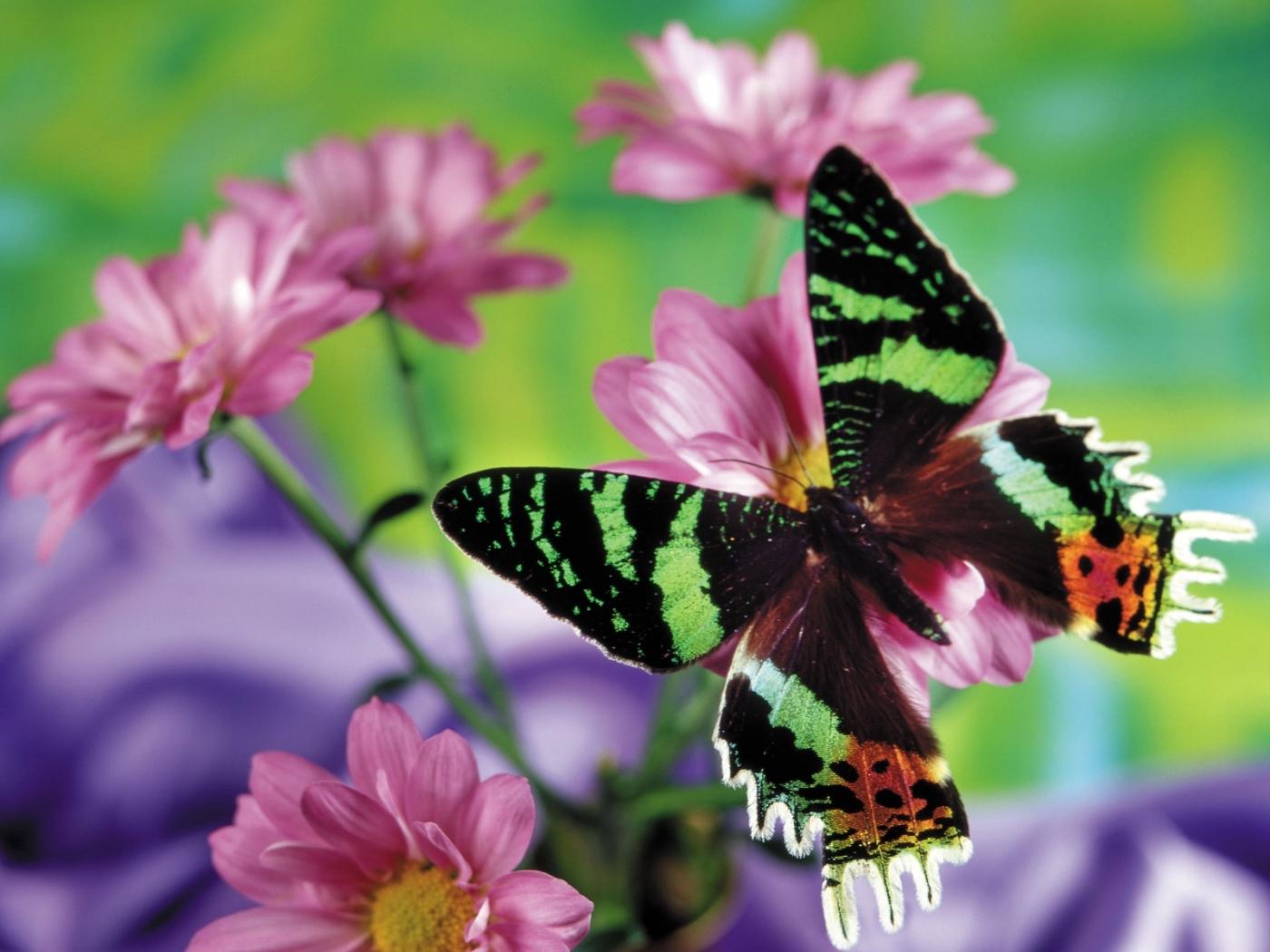 27982 Hintergrundbild herunterladen Schmetterlinge, Insekten - Bildschirmschoner und Bilder kostenlos
