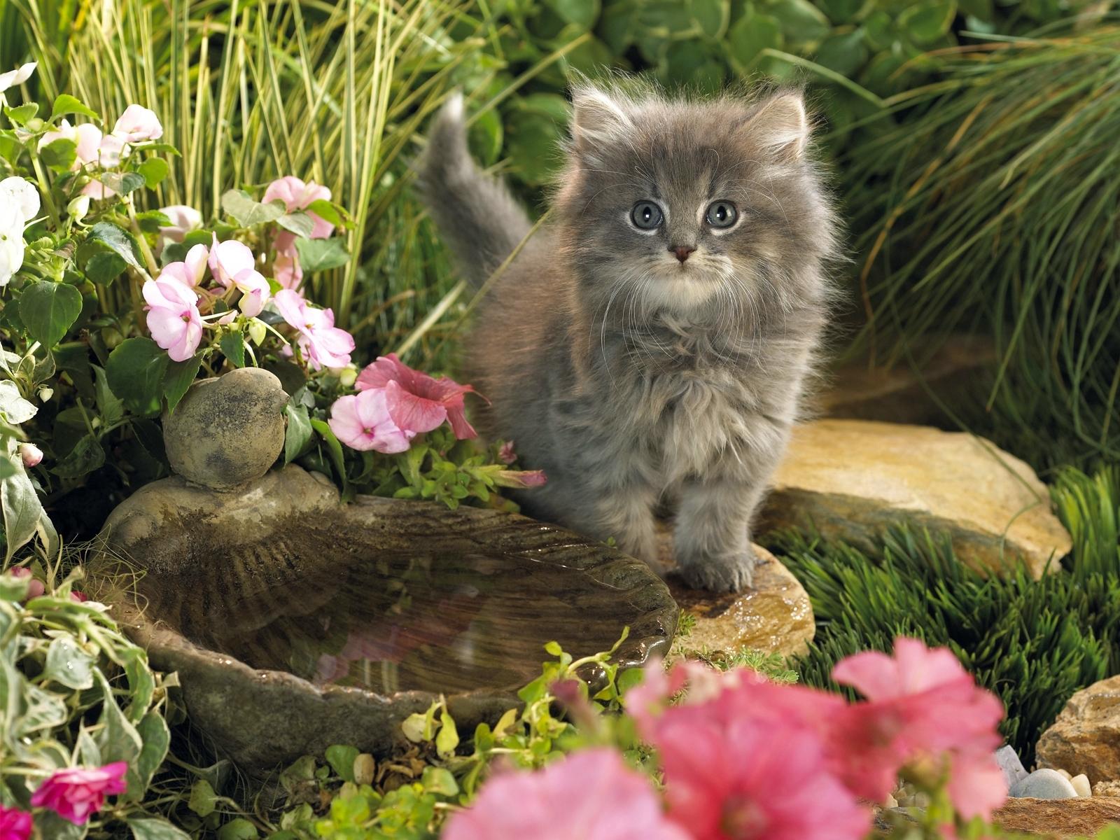 3527 скачать обои Животные, Кошки (Коты, Котики) - заставки и картинки бесплатно