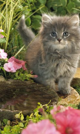 3527 download wallpaper Animals, Cats screensavers and pictures for free