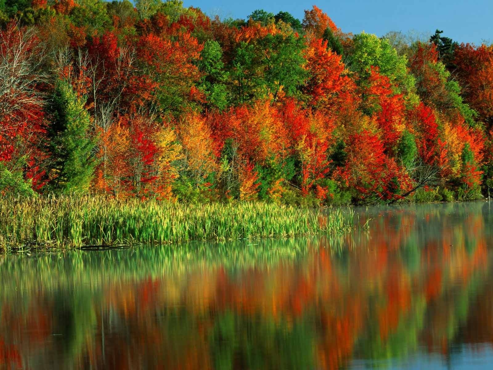 2694 download wallpaper Plants, Water, Trees, Autumn screensavers and pictures for free