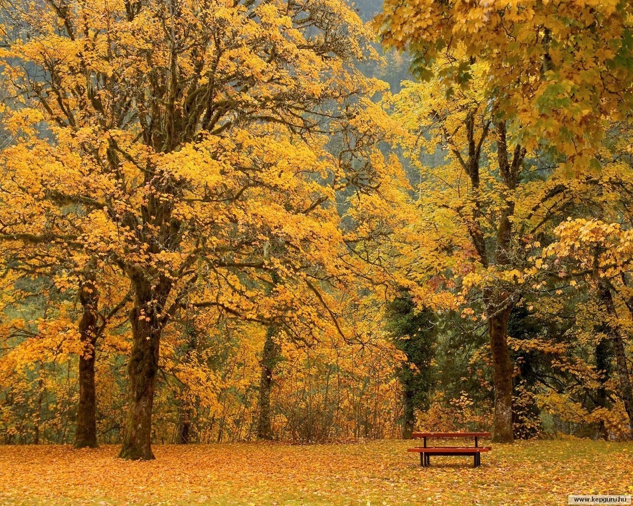 5464 download wallpaper Landscape, Trees, Autumn screensavers and pictures for free