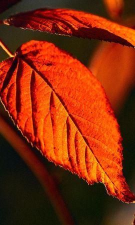 1169 скачать обои Растения, Листья - заставки и картинки бесплатно