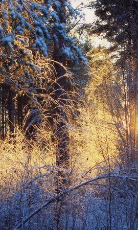 21356 скачать обои Пейзаж, Зима, Деревья, Закат, Снег - заставки и картинки бесплатно