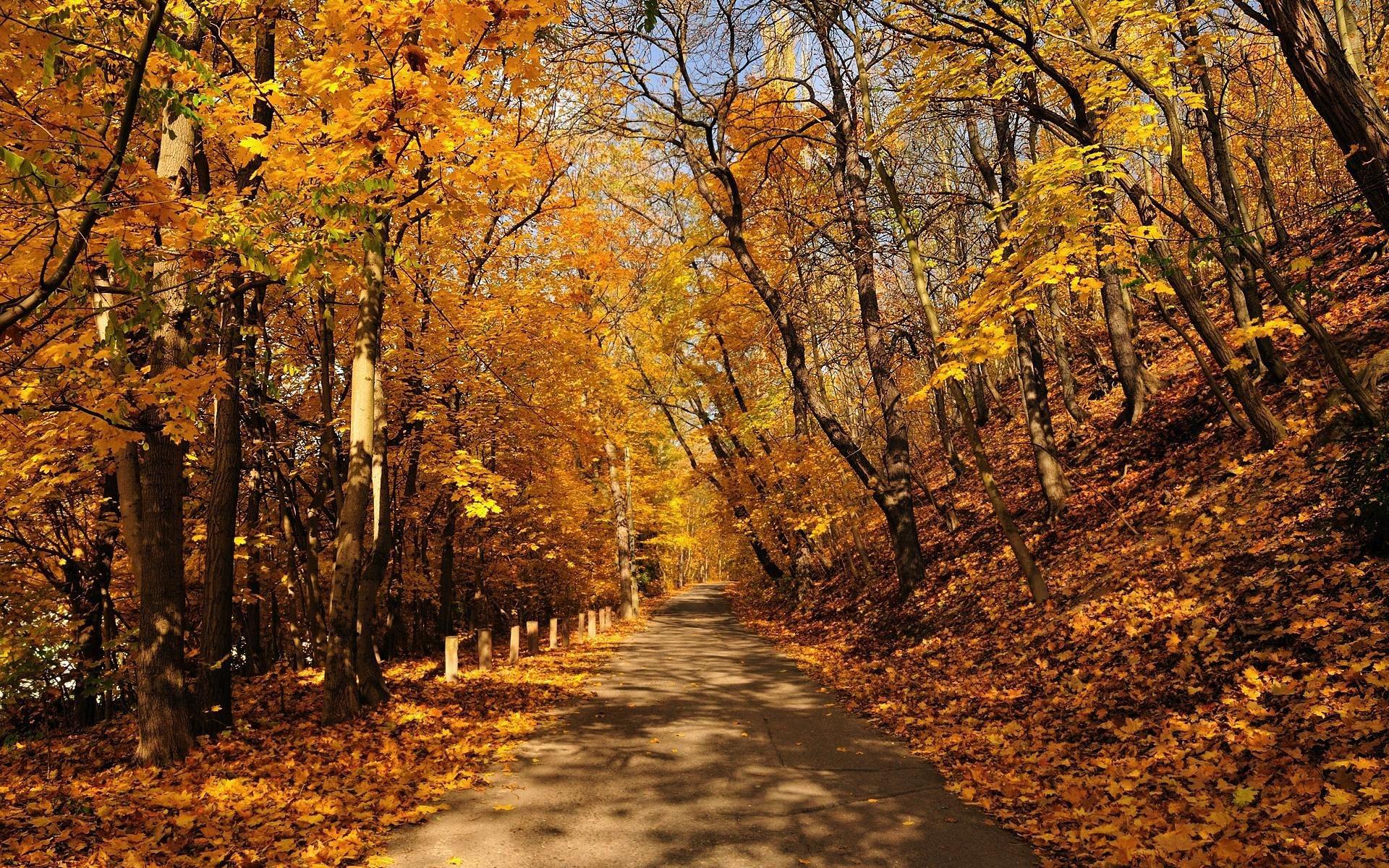 38095 скачать обои Пейзаж, Дороги, Осень - заставки и картинки бесплатно
