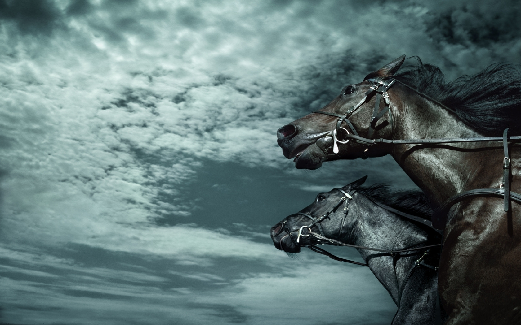 45295 download wallpaper Animals, Horses screensavers and pictures for free