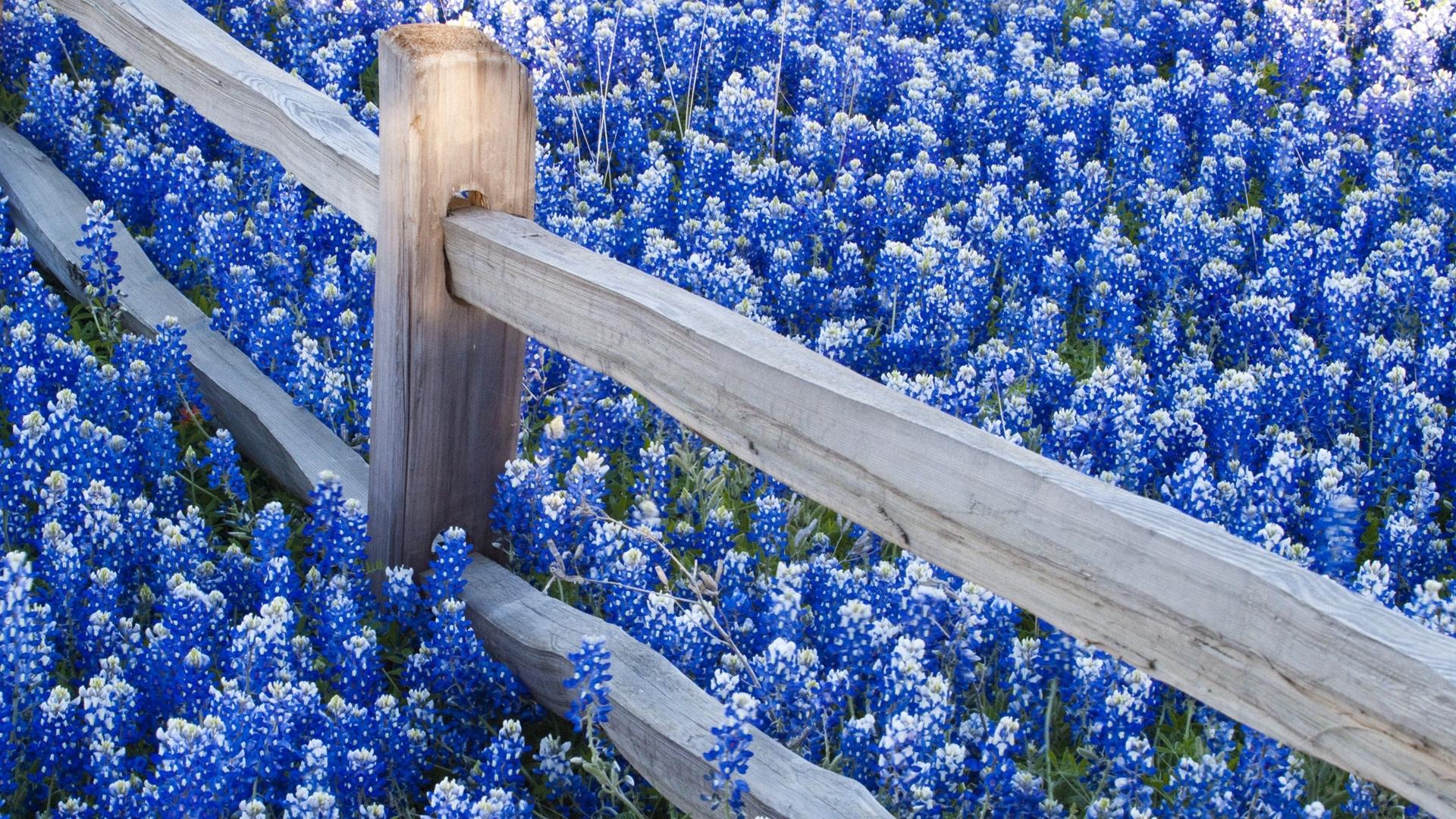 24963 скачать обои Растения, Пейзаж, Цветы - заставки и картинки бесплатно