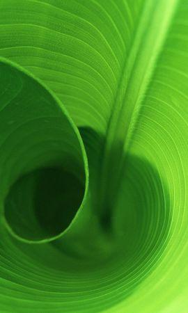 10120 скачать обои Растения, Фон, Листья - заставки и картинки бесплатно