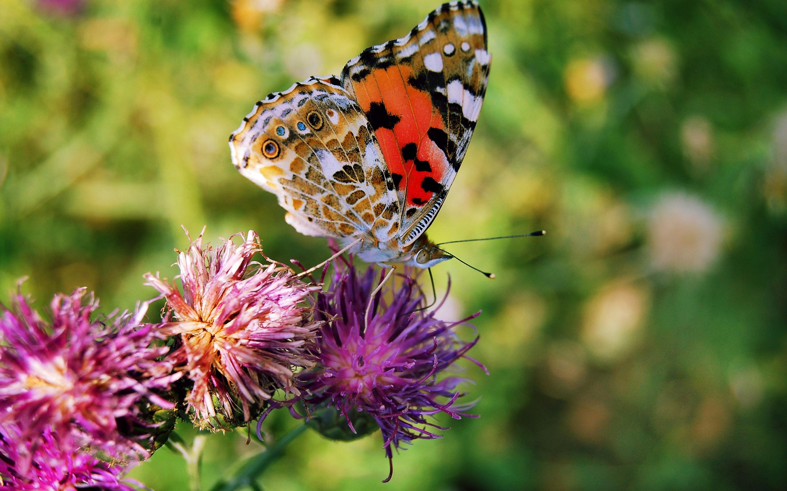 8891 скачать обои Бабочки, Цветы, Насекомые - заставки и картинки бесплатно