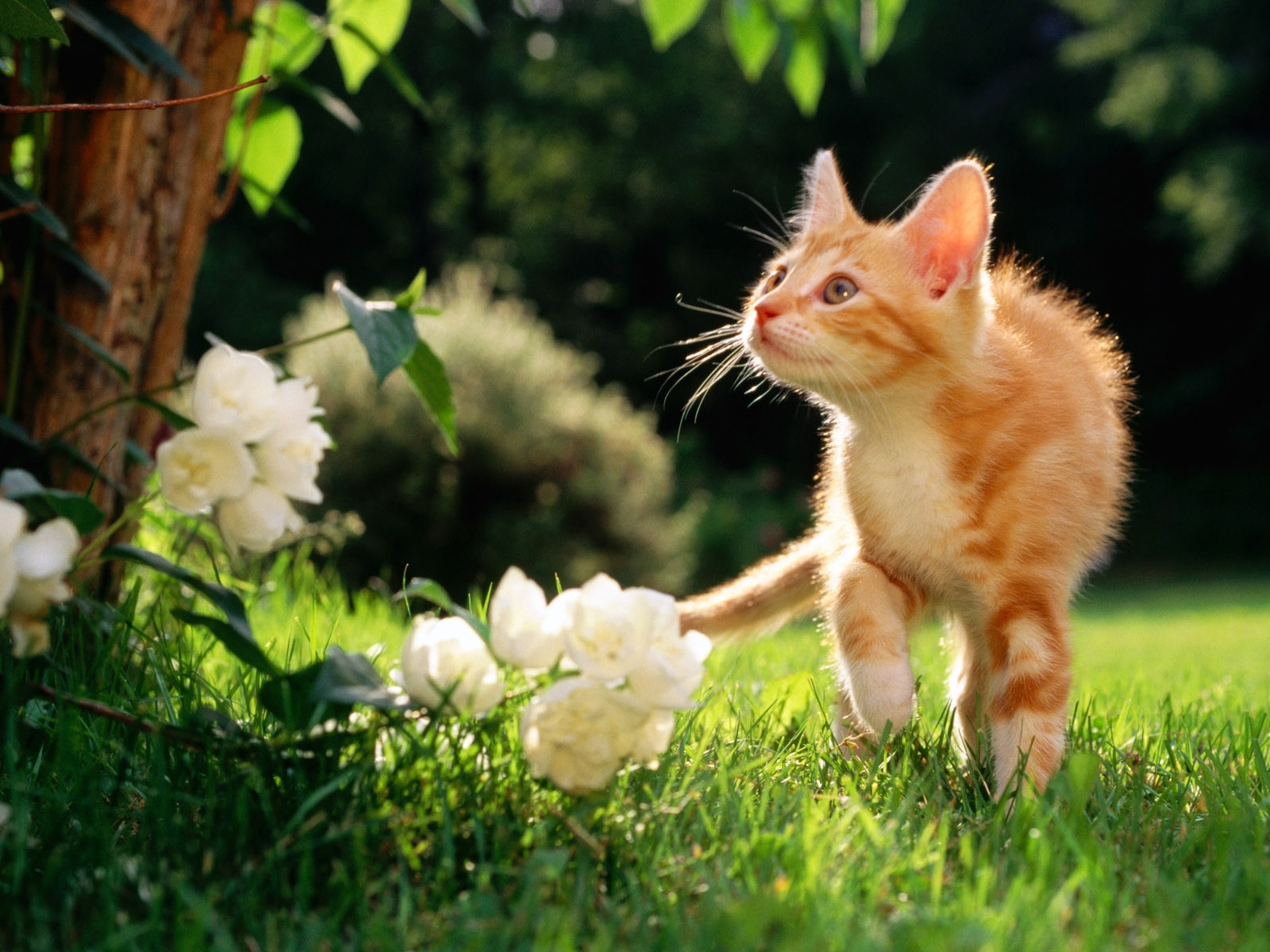 3044 download wallpaper Animals, Cats screensavers and pictures for free