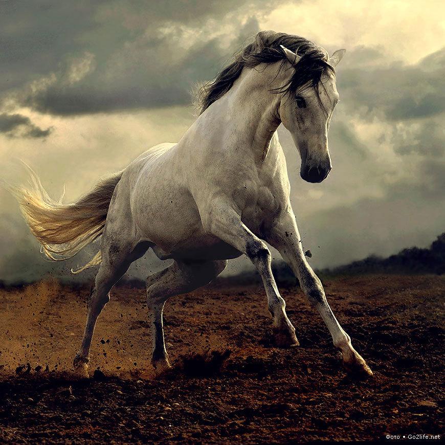 19924 скачать обои Животные, Лошади - заставки и картинки бесплатно