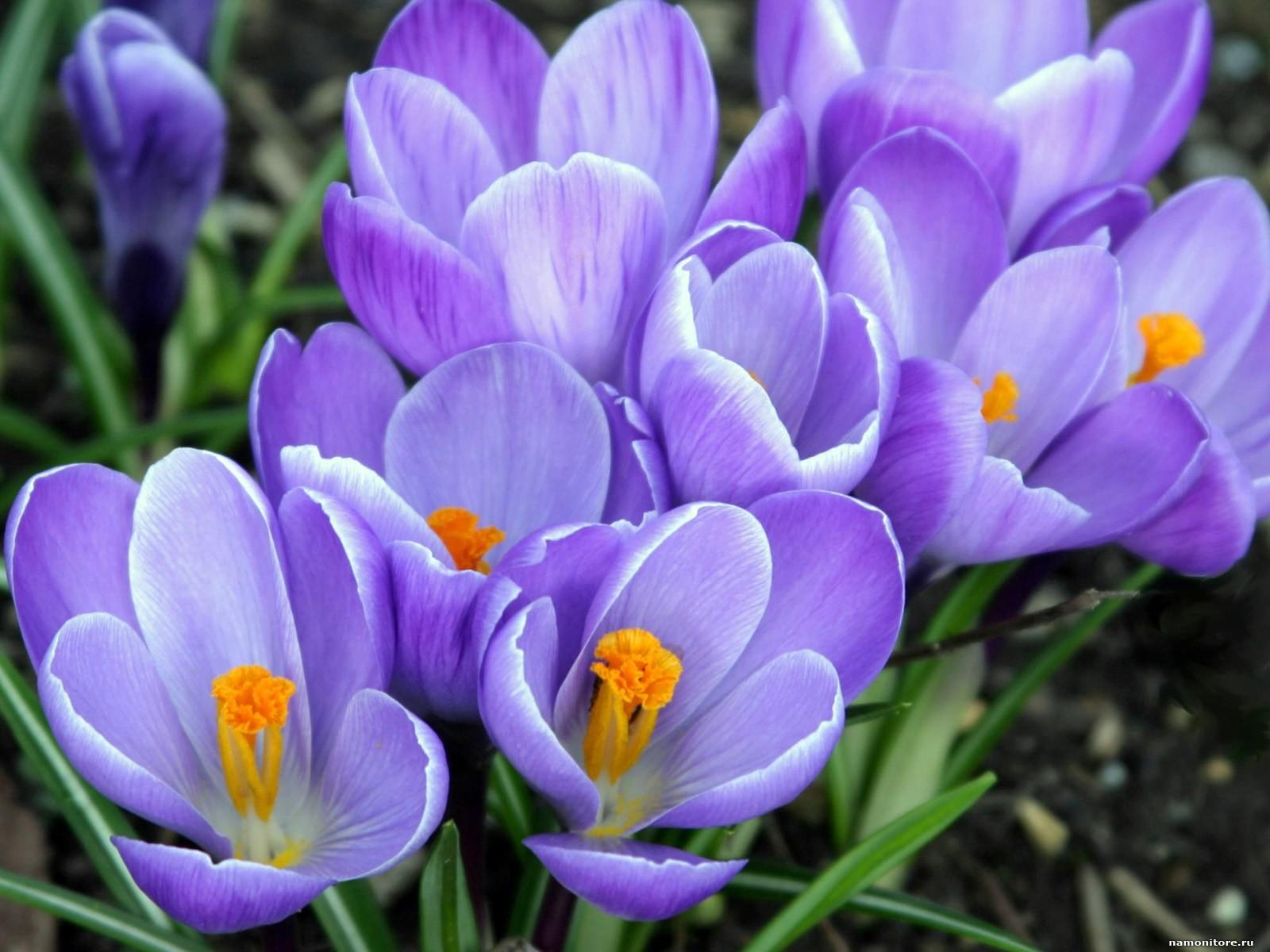 21207 скачать обои Растения, Цветы - заставки и картинки бесплатно