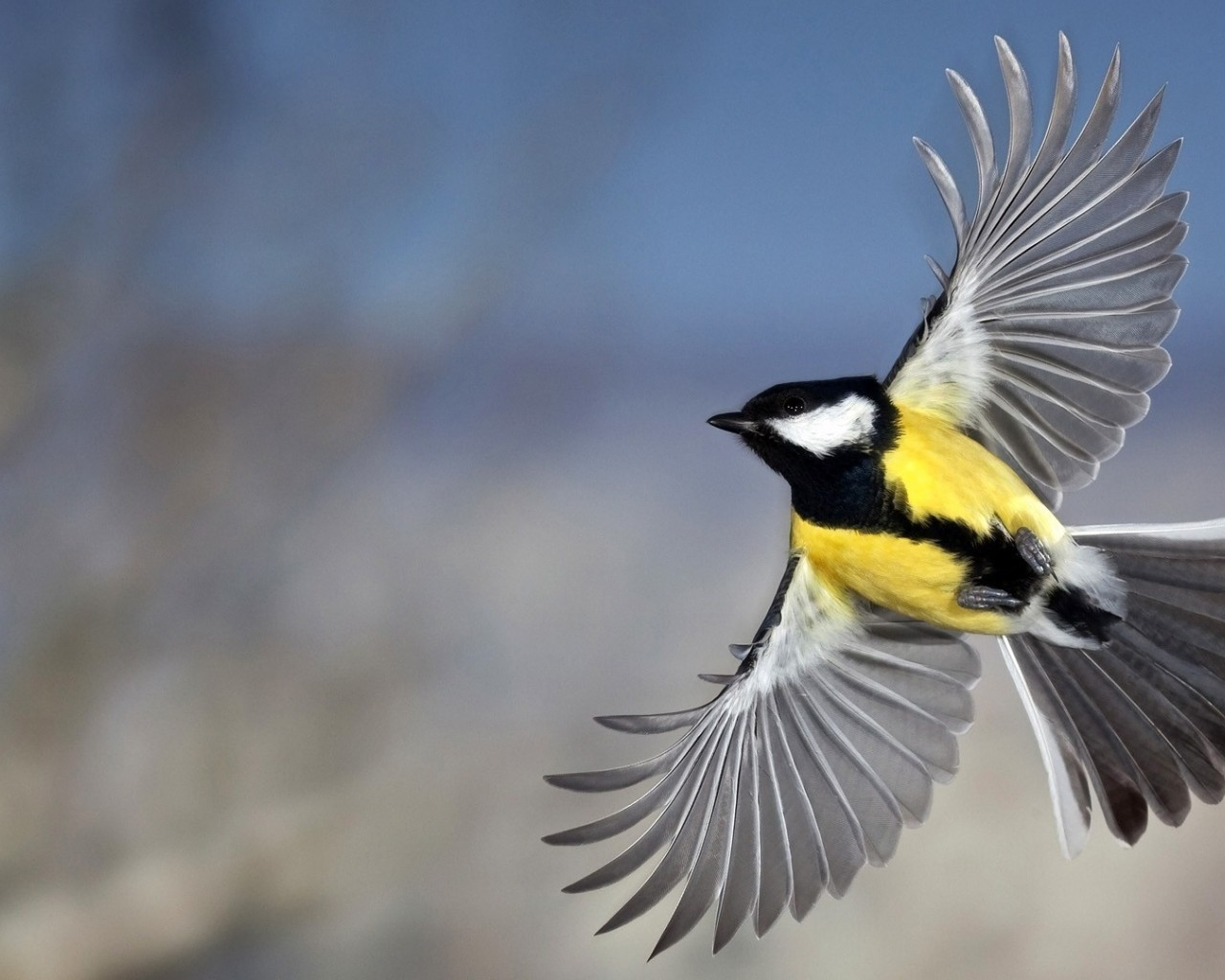 18080 download wallpaper Animals, Birds screensavers and pictures for free