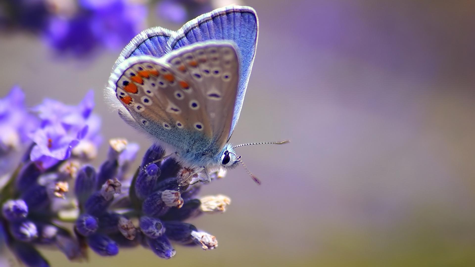 29269 скачать обои Бабочки, Насекомые - заставки и картинки бесплатно