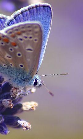 29269 Salvapantallas y fondos de pantalla Insectos en tu teléfono. Descarga imágenes de Mariposas, Insectos gratis
