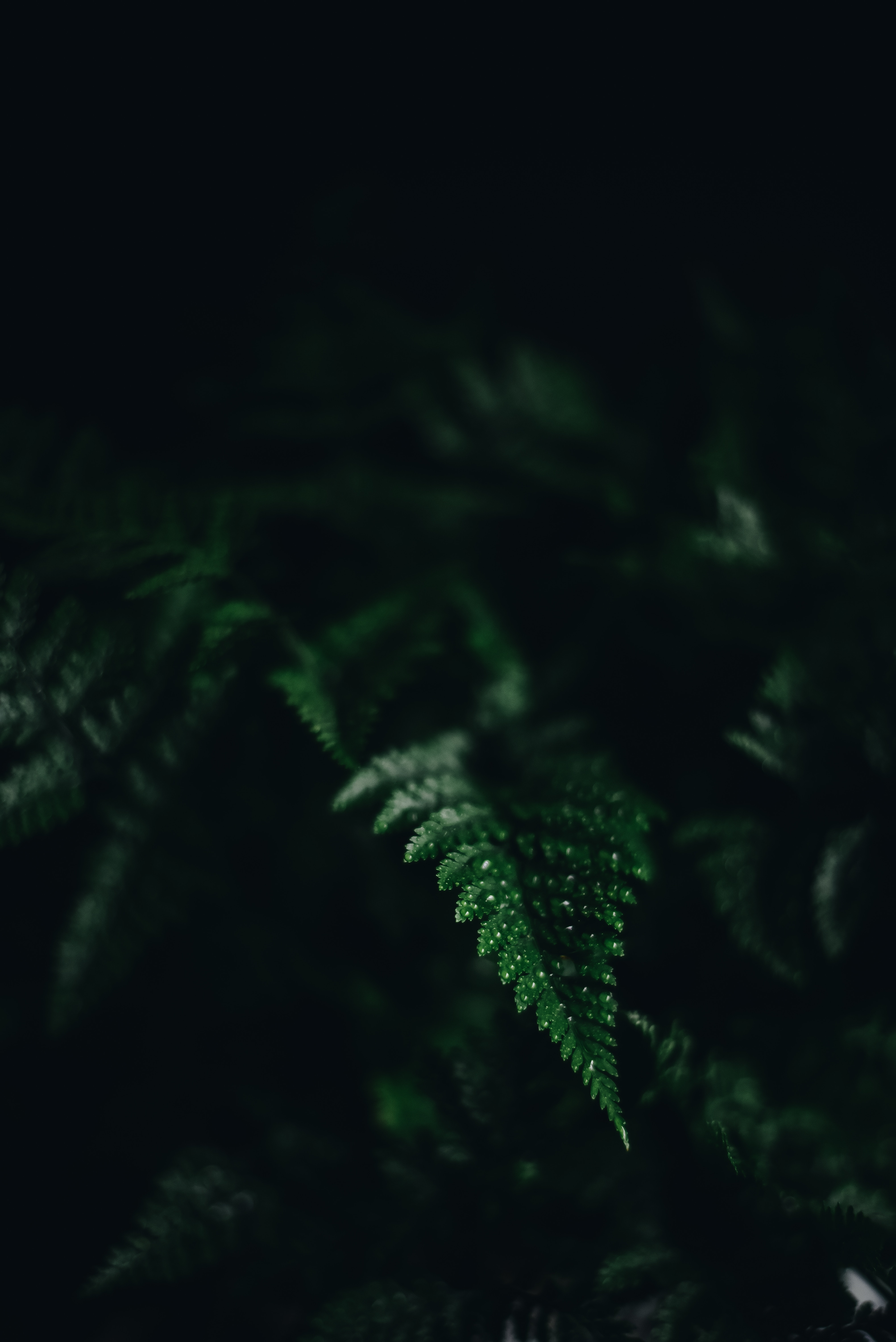 59344 download wallpaper Macro, Dark, Fern, Sheet, Leaf, Carved, Shadow screensavers and pictures for free