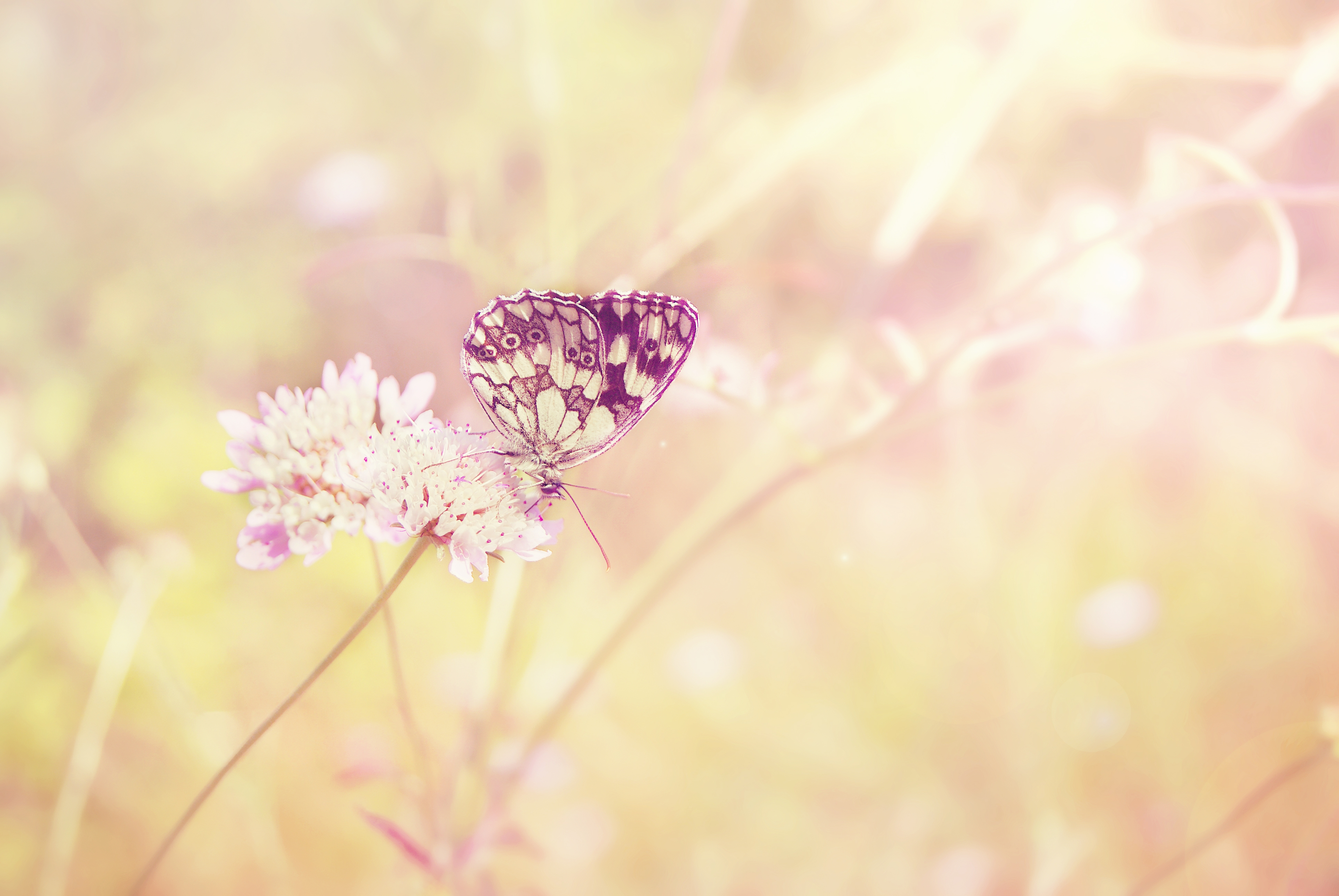 87094 download wallpaper Macro, Butterfly, Summer, Insect, Field, Plant, Shine, Light, Color, Flower, Sun screensavers and pictures for free