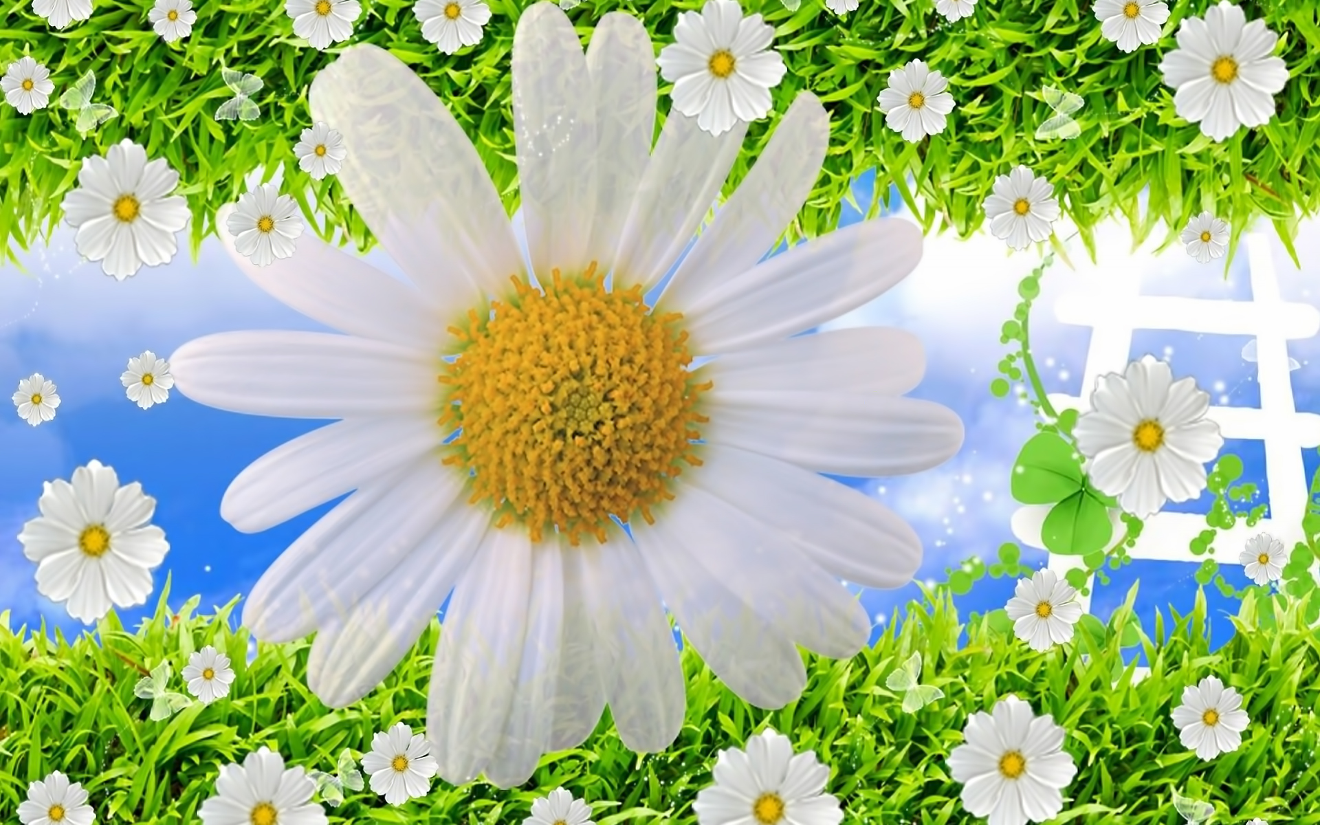 29883 download wallpaper Plants, Flowers, Background, Camomile screensavers and pictures for free