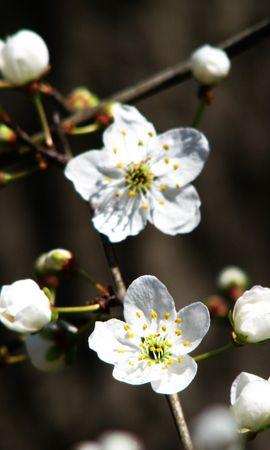 1732 descargar fondo de pantalla Plantas, Flores: protectores de pantalla e imágenes gratis