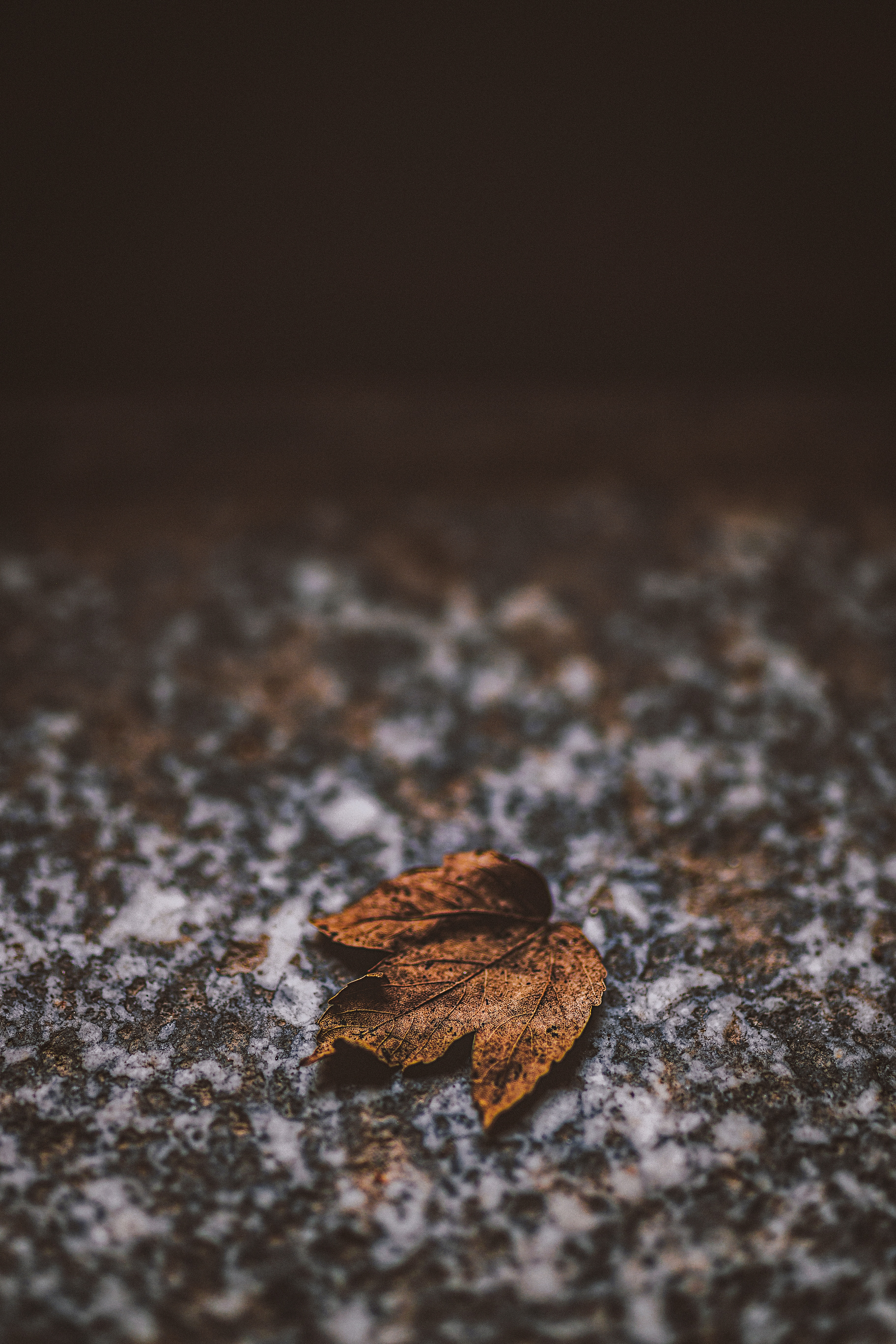157626 download wallpaper Macro, Leaflet, Dry, Rock, Stone, Brown, Autumn screensavers and pictures for free