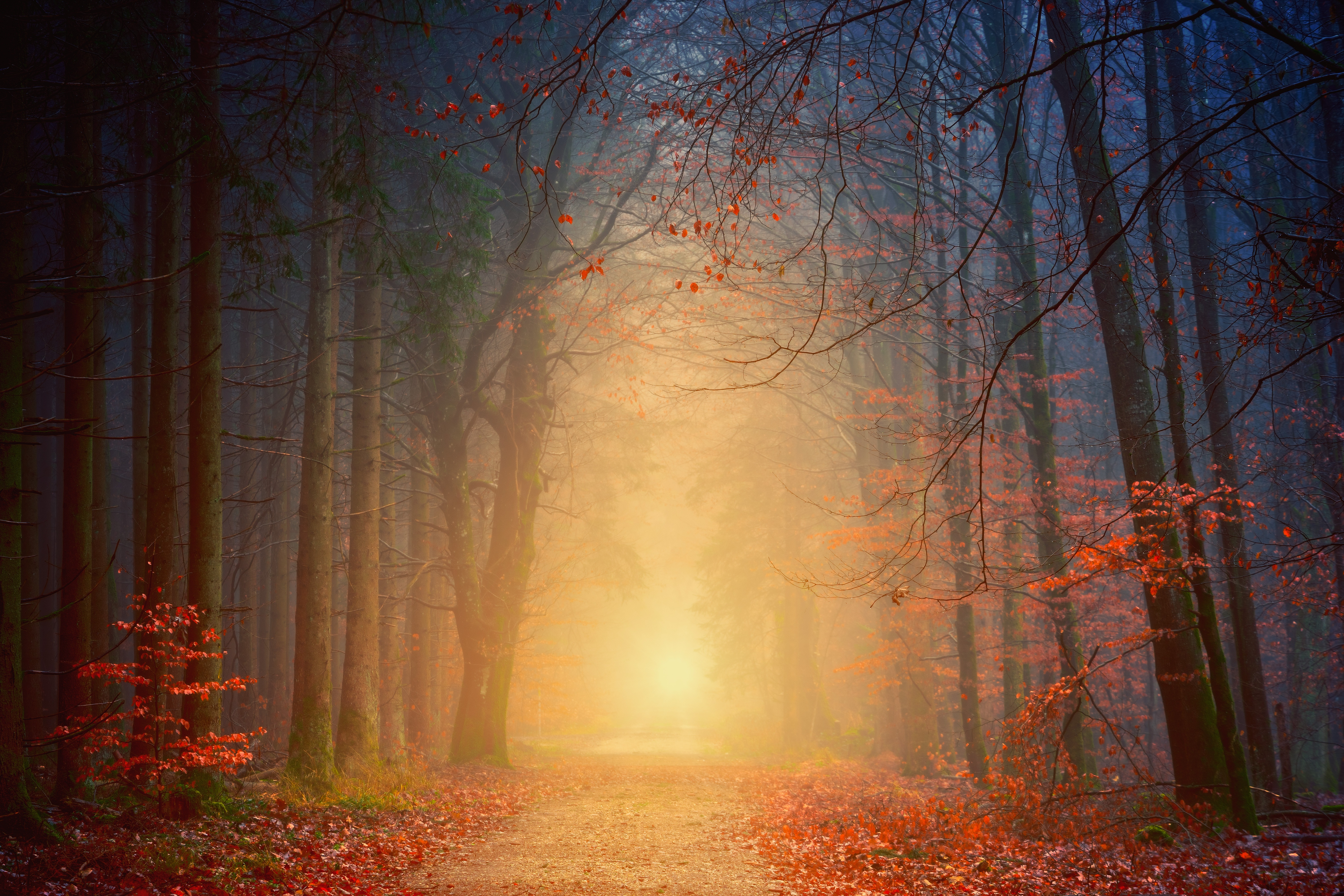 81086 Screensavers and Wallpapers Foliage for phone. Download Nature, Trees, Autumn, Forest, Fog, Foliage pictures for free