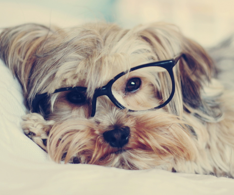 15242 download wallpaper Animals, Dogs, Art Photo screensavers and pictures for free