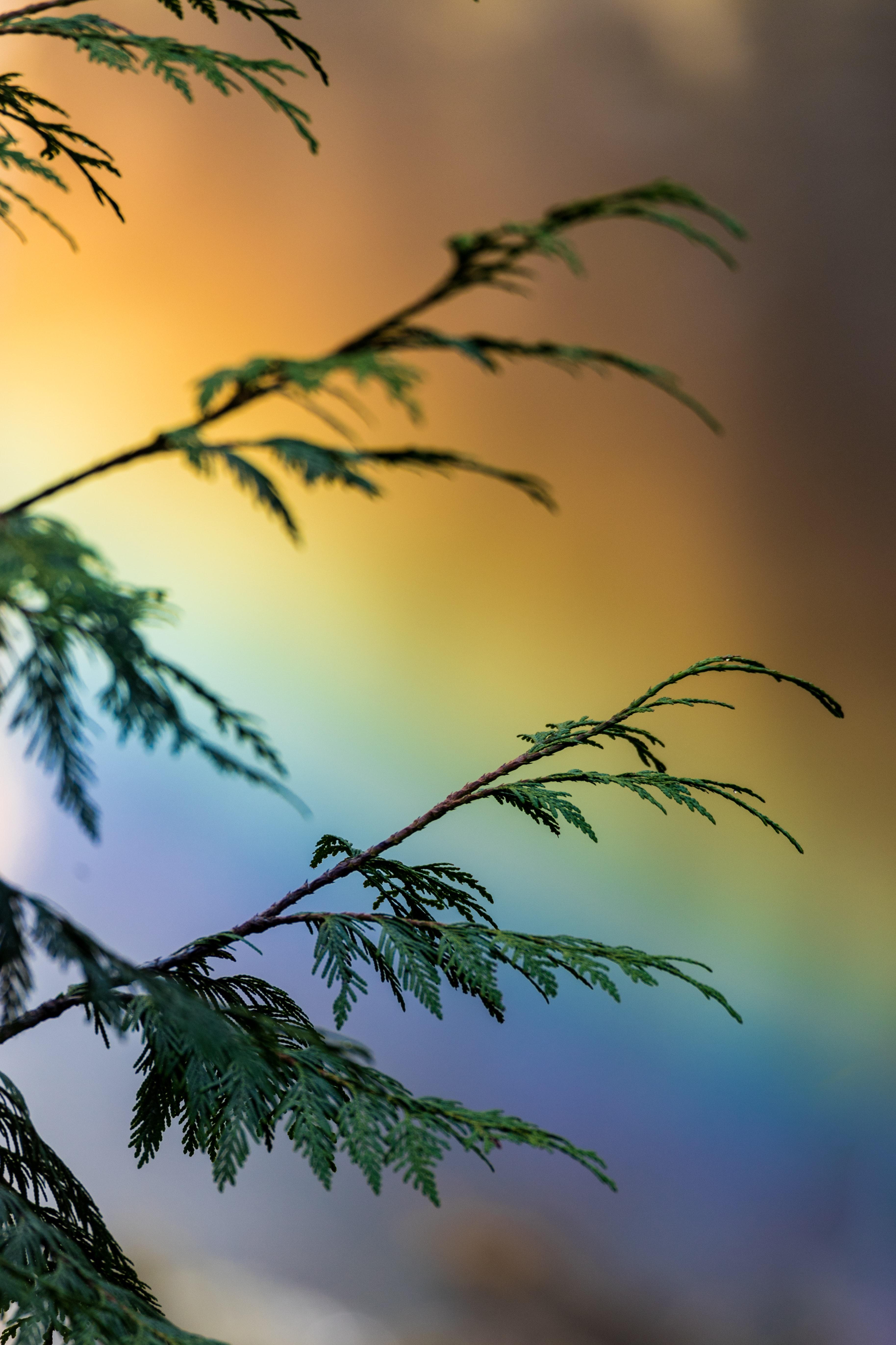 54211 免費下載壁紙 杂项, 分支, 植物, 彩虹, 多彩多姿, 五颜六色 屏保和圖片