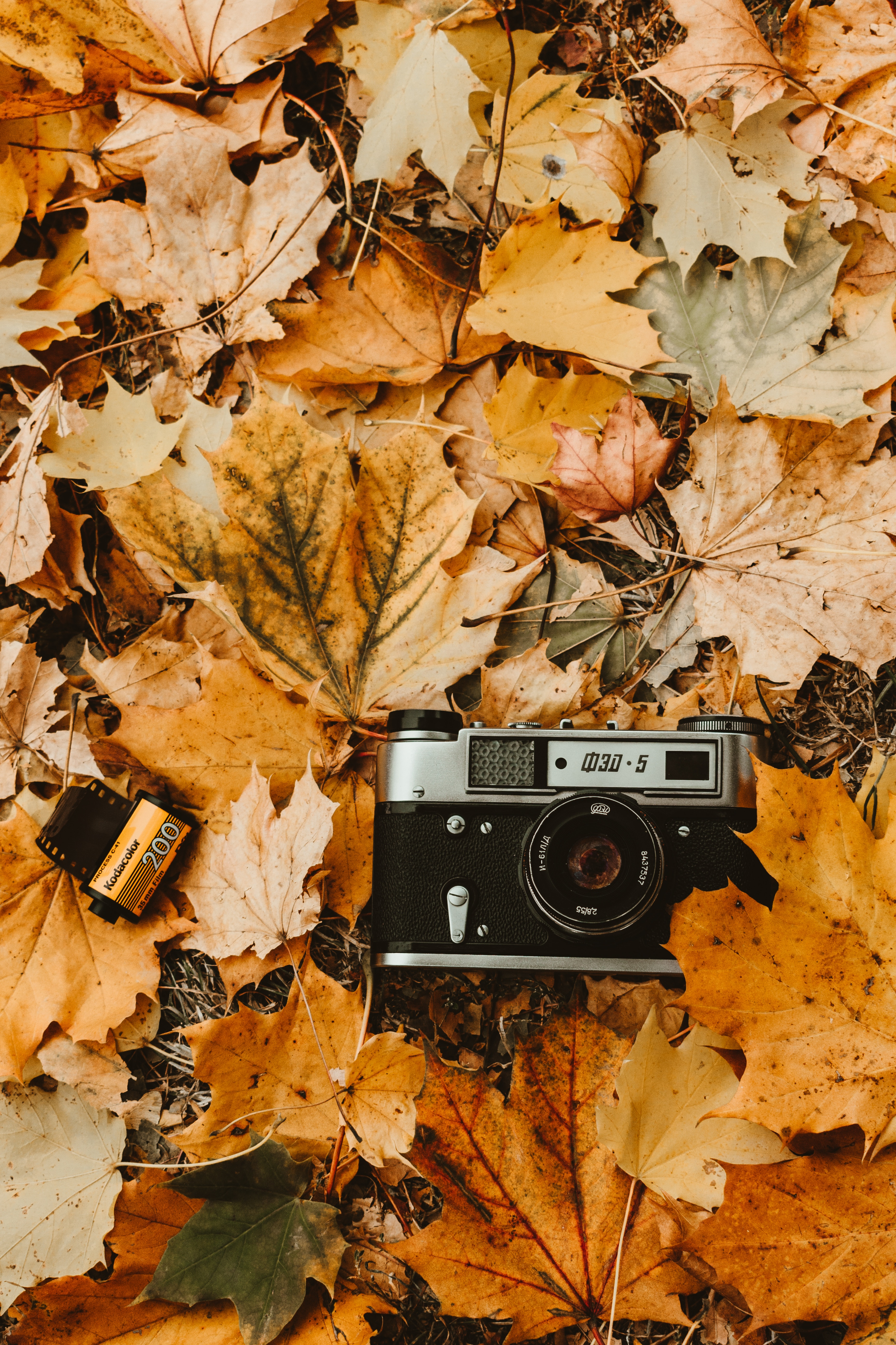 74128 download wallpaper Technologies, Technology, Camera, Autumn, Foliage, Retro, Vintage, Camera Roll screensavers and pictures for free