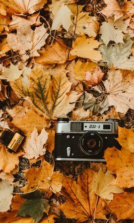 お使いの携帯電話の74128スクリーンセーバーと壁紙テクノロジー。 テクノロジー, カメラ, 秋, 葉, 木の葉, レトロ, ビンテージ, カメラロールの写真を無料でダウンロード