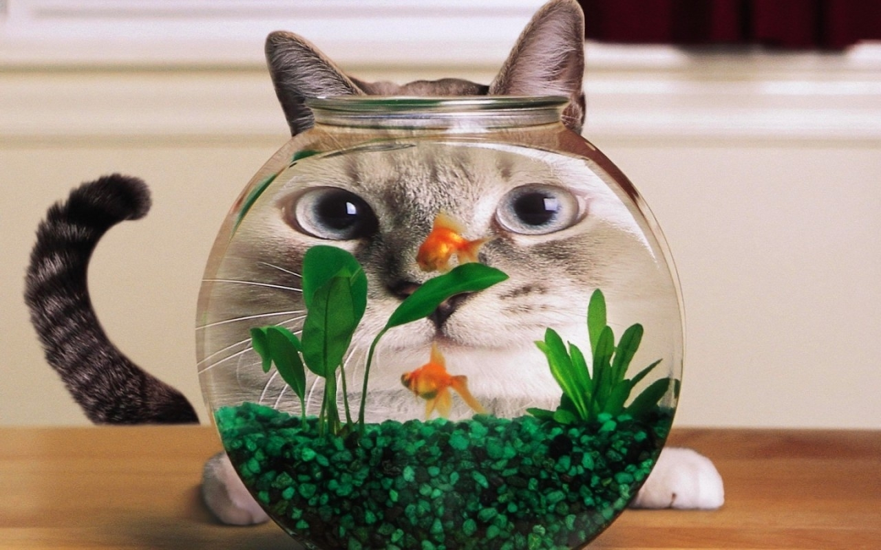 1927 download wallpaper Funny, Animals, Cats, Aquariums screensavers and pictures for free