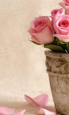 17540 скачать обои Растения, Цветы, Розы - заставки и картинки бесплатно