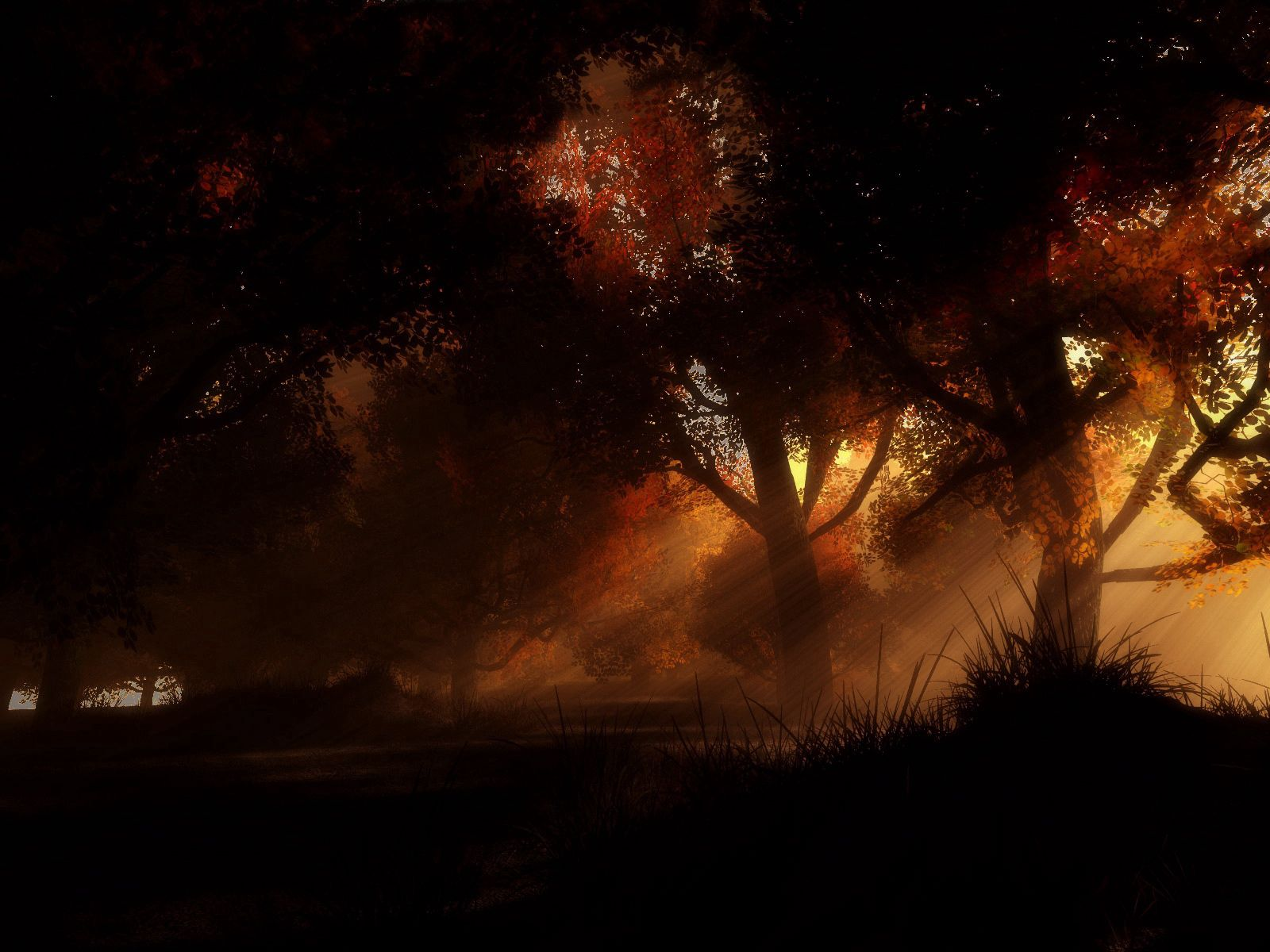 155436 download wallpaper Dark, Trees, Autumn, Night screensavers and pictures for free