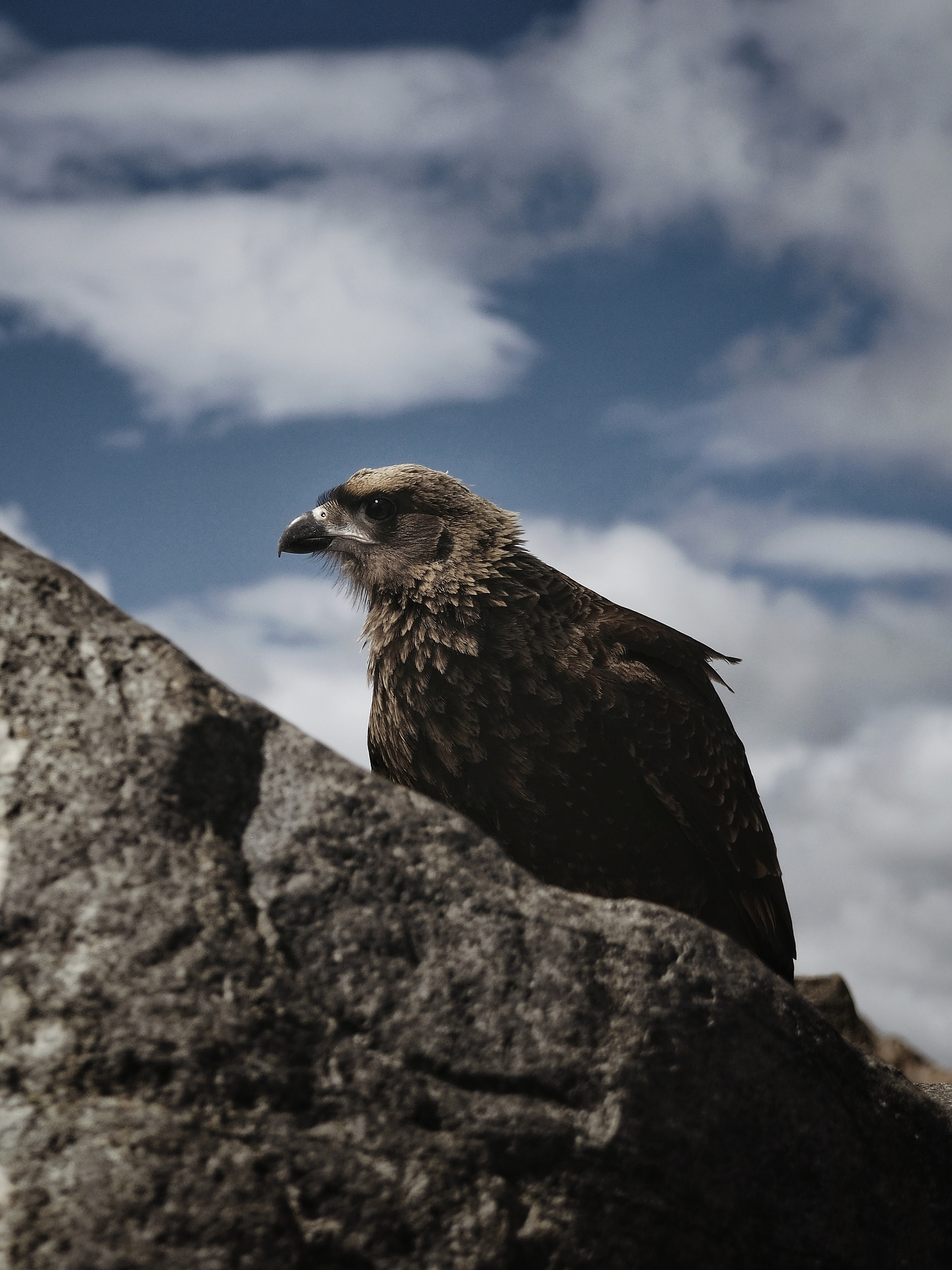 153183 download wallpaper Animals, Hawk, Bird, Rock, Wildlife screensavers and pictures for free