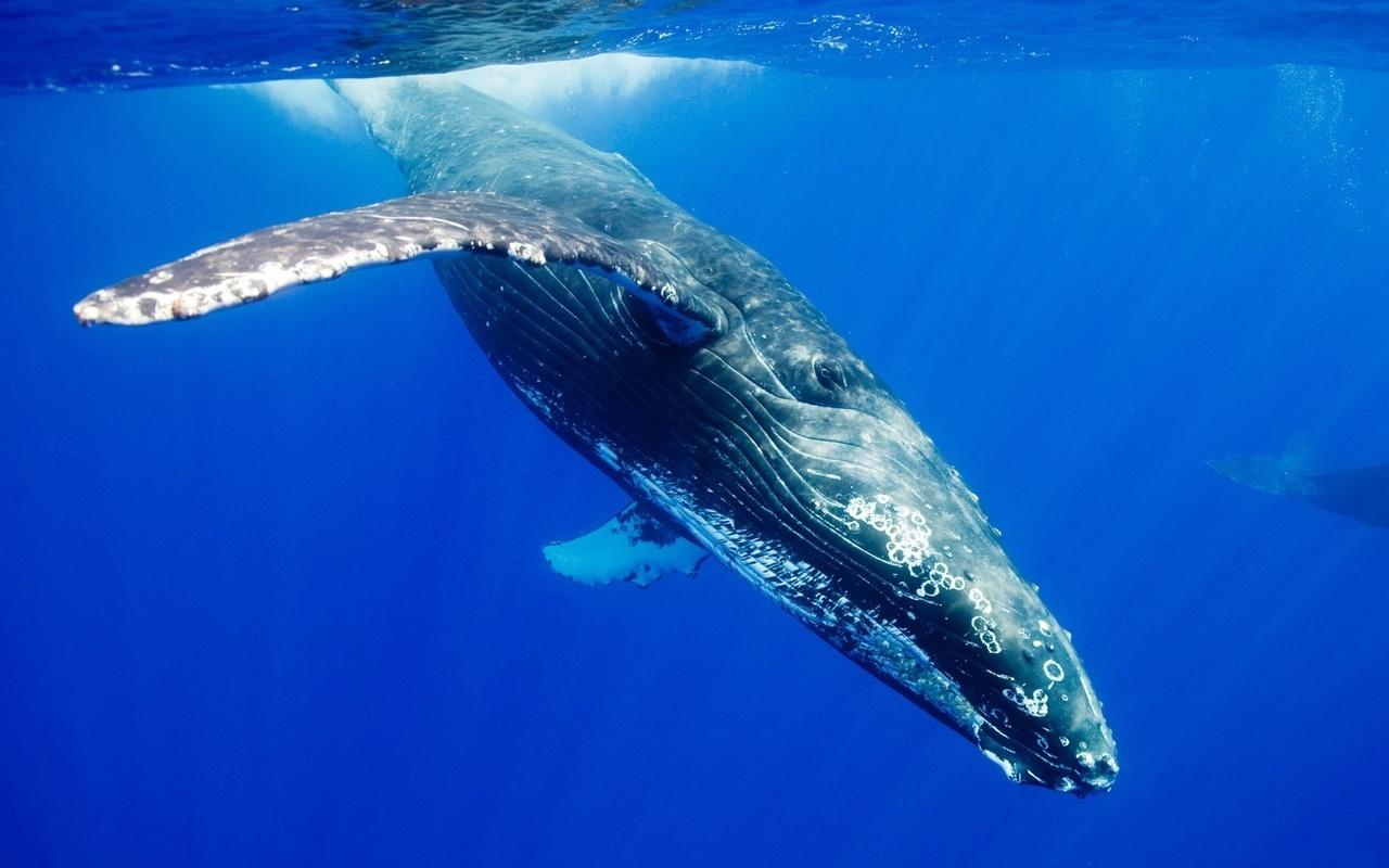 20930 обои 480x800 на телефон бесплатно, скачать картинки Животные, Море, Киты 480x800 на мобильный