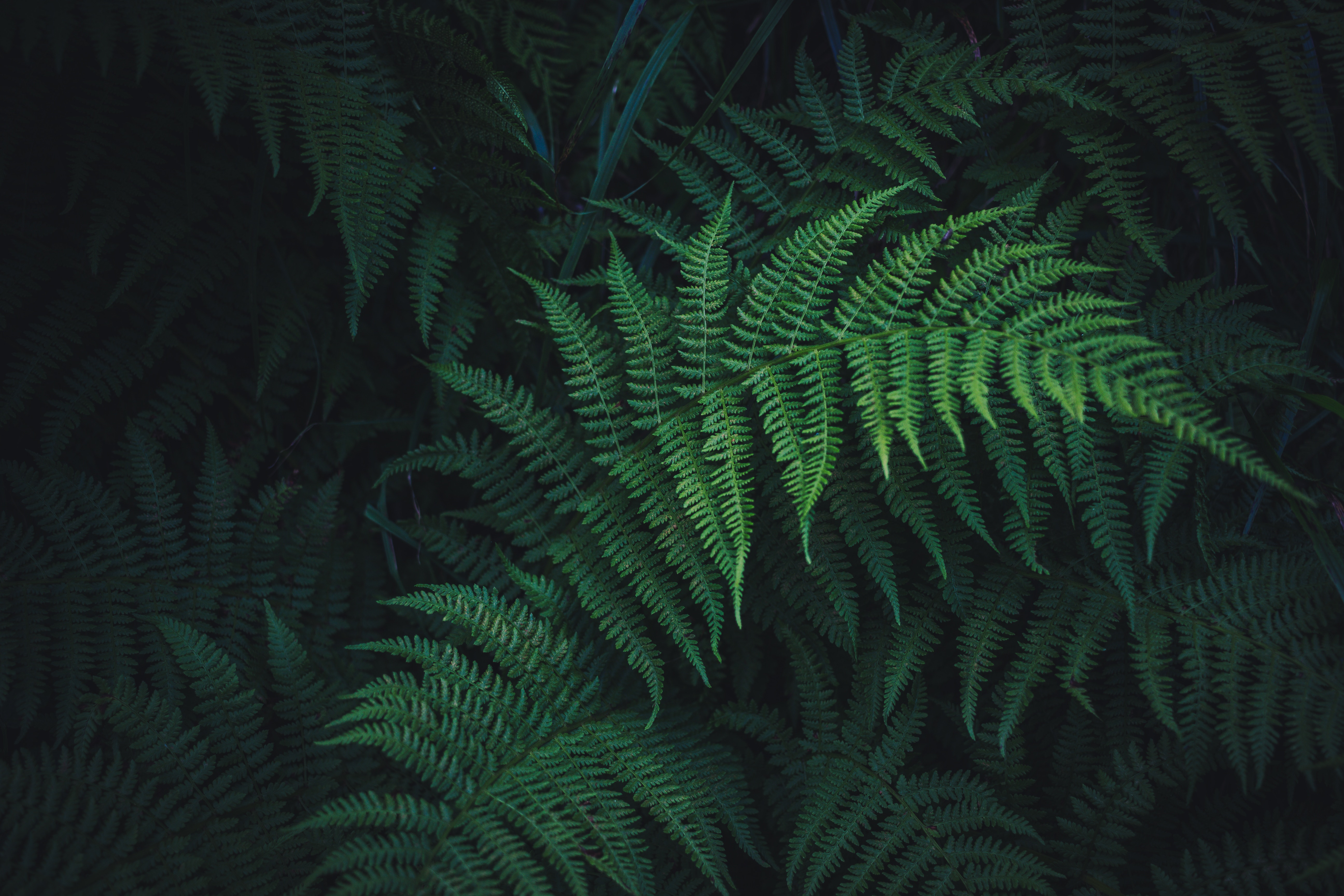 140246 download wallpaper Leaves, Nature, Plant, Fern, Carved screensavers and pictures for free