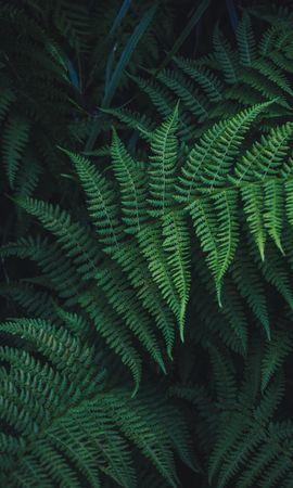 140246携帯電話用の緑壁紙を無料でダウンロード、自然, シダ, 羊歯, 葉, 工場, 植物, 刻まれた, 彫刻 緑写真と携帯電話用スクリーンセーバー
