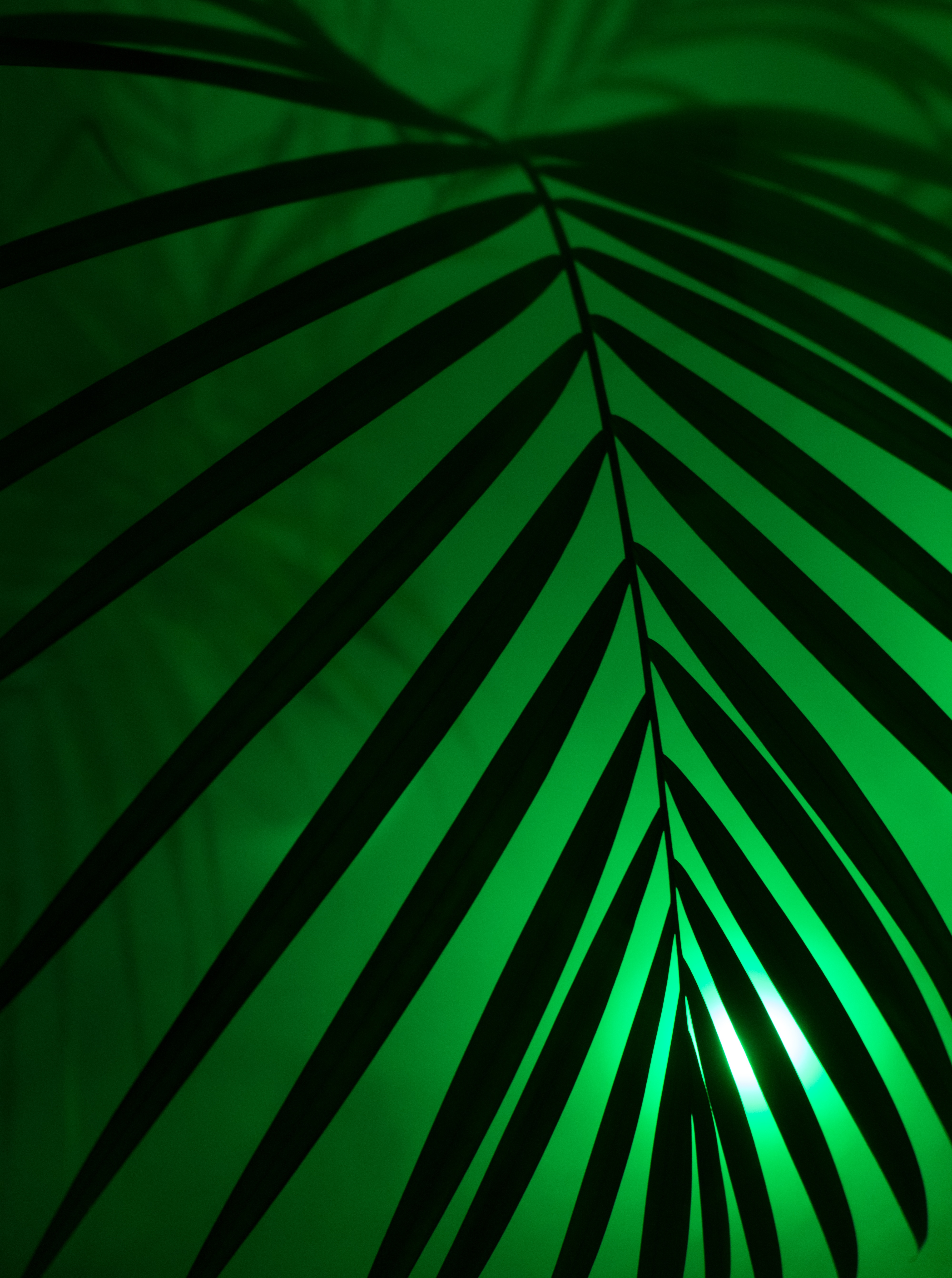 68015 download wallpaper Dark, Sheet, Leaf, Neon, Palm, Shine, Light screensavers and pictures for free