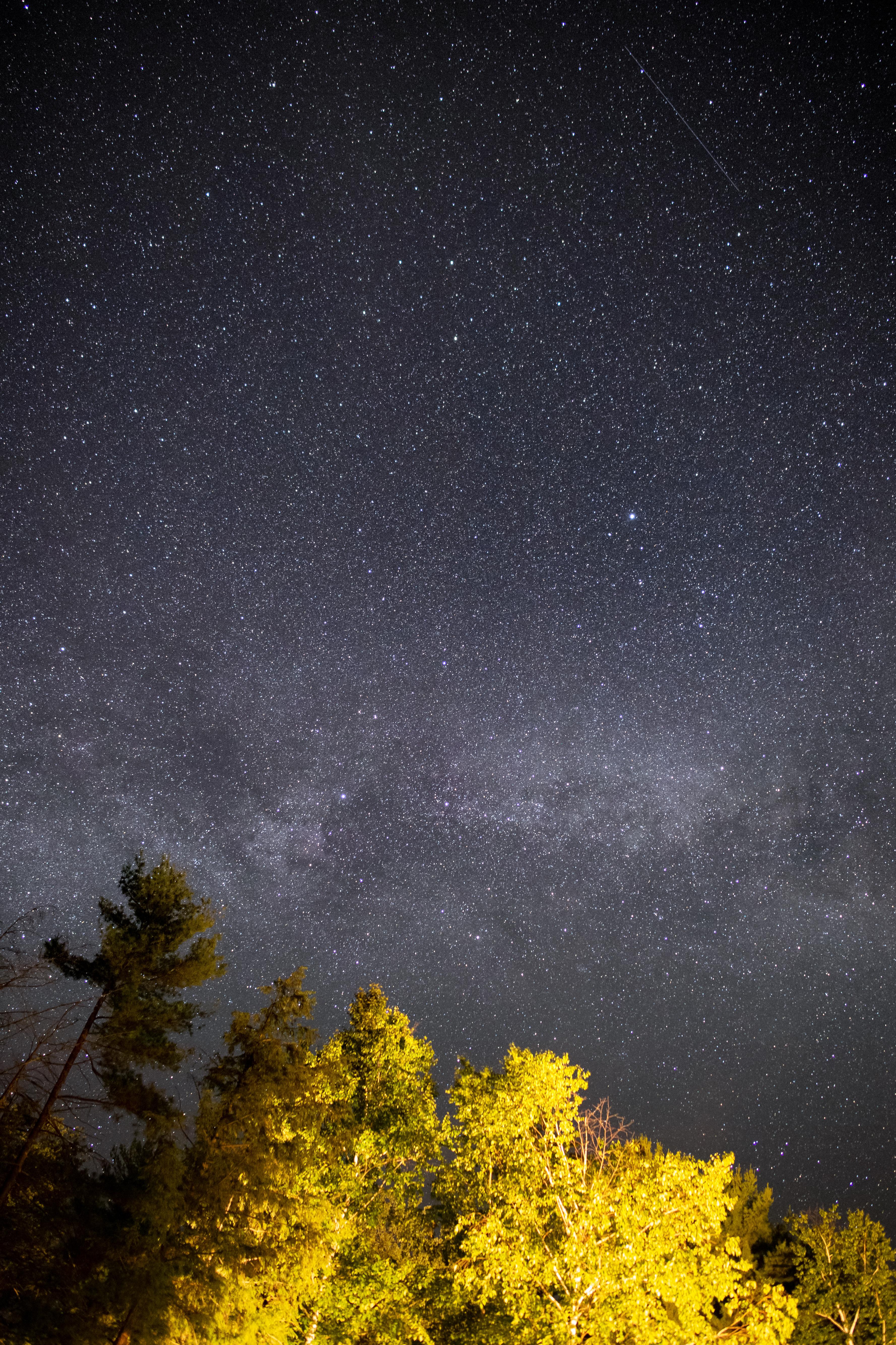 138452 скачать обои Темные, Деревья, Звездное Небо, Ночь, Звезды - заставки и картинки бесплатно