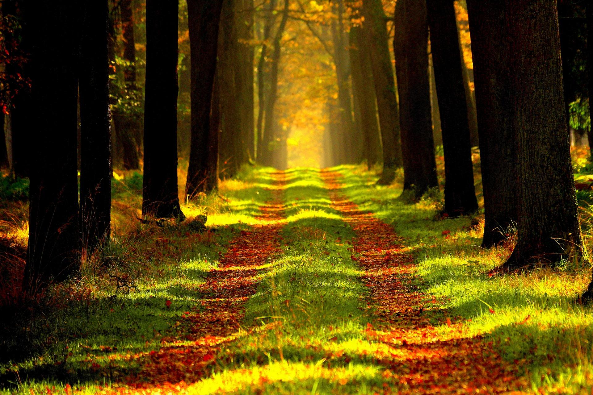 109517 Заставки і шпалери Осінь на телефон. Завантажити Природа, Дерева, Осінь, Листя, Ліс, Стежка, Шлях картинки безкоштовно