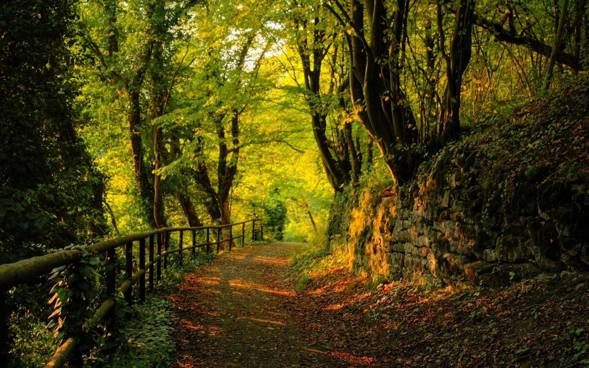 99751 download wallpaper Nature, Trees, Stones, Autumn, Leaves, Forest, Path, Trail screensavers and pictures for free